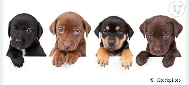 chien pour famille chien bonheur. Black Bedroom Furniture Sets. Home Design Ideas