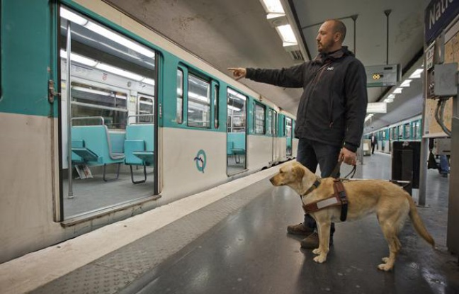 Formation chien guide d'aveugle toulouse