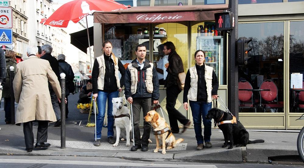 Ecole de chiens guides de paris - Chien bonheur