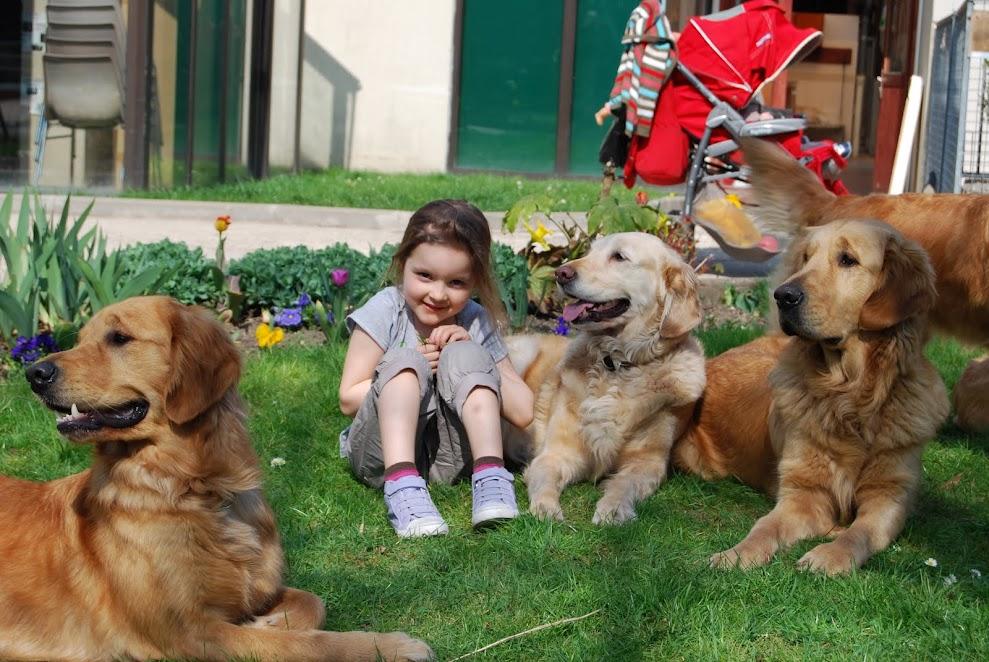 Devenir famille d accueil pour chien guide - Chien bonheur