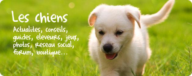 Site de chien - Chien bonheur