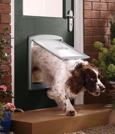 chien pour porte chien bonheur. Black Bedroom Furniture Sets. Home Design Ideas