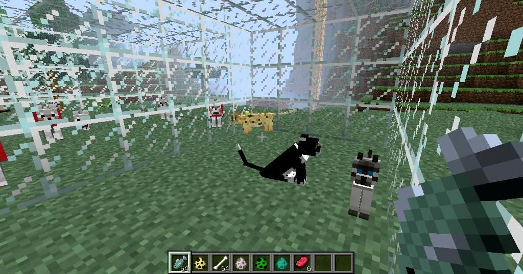 Tout savoir sur les chiens chien bonheur for Tout savoir sur le poussin