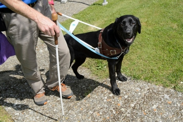 Ecole dressage chien aveugle