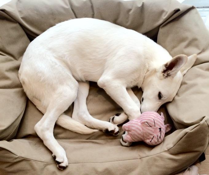 Adopter chien d aveugle reforme - Chien bonheur