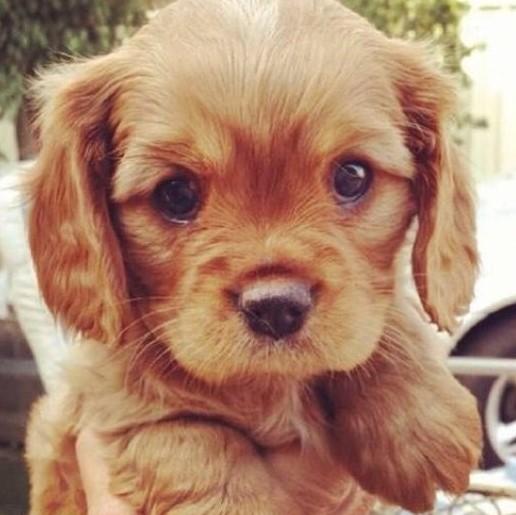B b chien chien bonheur - Image bebe chien ...