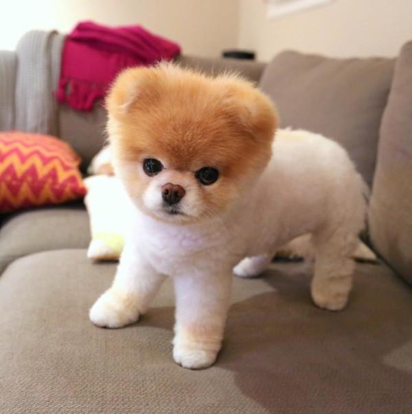 Les chiens les plus beau au monde – Chien bonheur