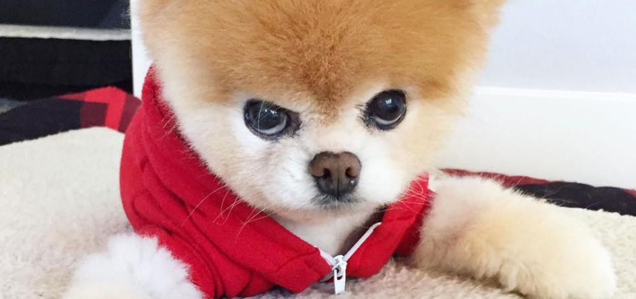 Le chien le plus beau du monde book
