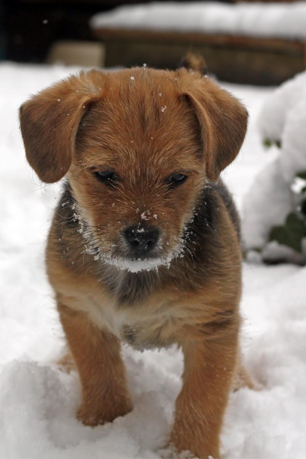 animal mignon petit chien - photo #22