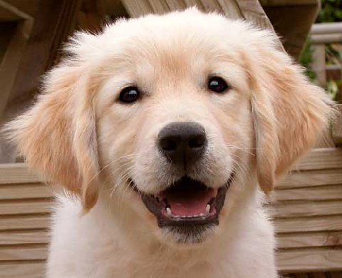Tete de chien chien bonheur - Photo de chiot a imprimer ...