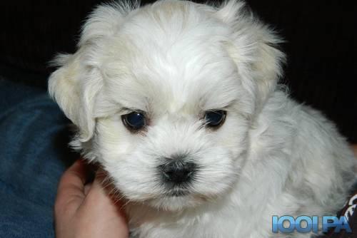 Cherche chien a adopter petite taille chien bonheur - Petit chien gratuit ...