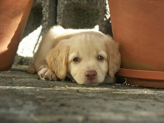 Chiots a adopter gratuitement ici chien bonheur - Petit chien gratuit ...