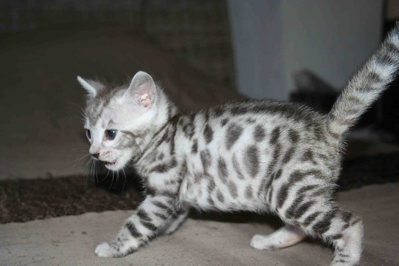Animaux a donner chien bonheur - Jeux de petit chaton gratuit ...