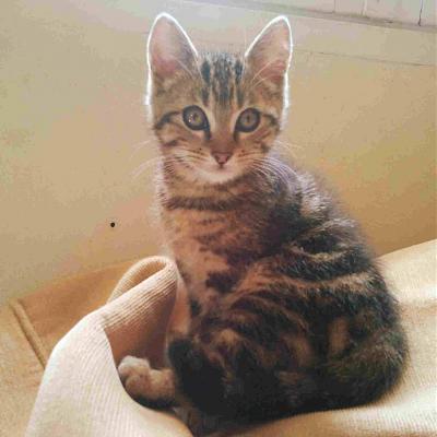 chaton de 3 mois nain