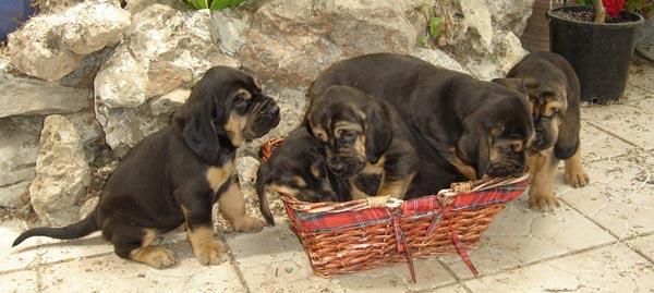 le bon coin petit chien a donner ici chien bonheur. Black Bedroom Furniture Sets. Home Design Ideas