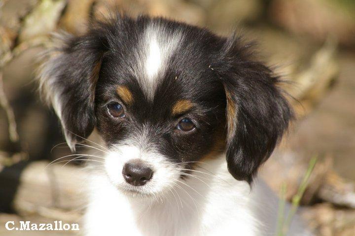 Cherche chiot petite taille ici chien bonheur - Chiot beagle gratuit ...