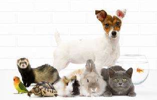 chat a adopter gratuit chien bonheur. Black Bedroom Furniture Sets. Home Design Ideas