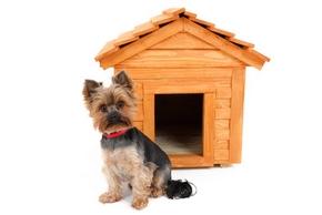 recherche petit chien pas cher chien bonheur. Black Bedroom Furniture Sets. Home Design Ideas