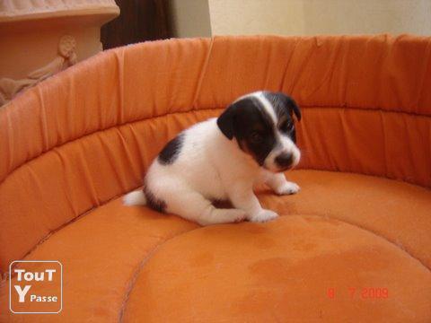 Adopter un chiot gratuit chien bonheur - Chiots gratuit ...