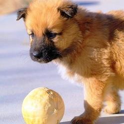 Donne petit chien gratuit ici chien bonheur - Petit chien gratuit ...
