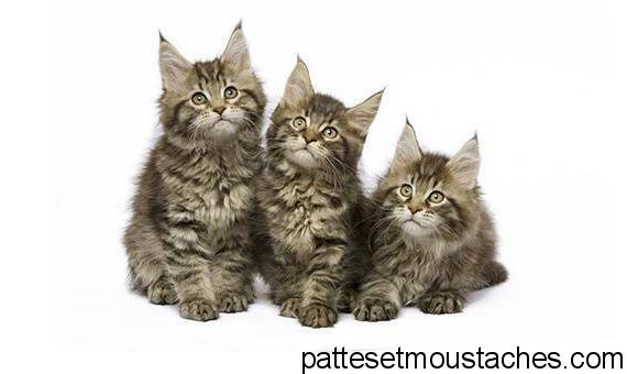 Ou trouver un chaton gratuit chien bonheur - Petit chaton gratuit ...