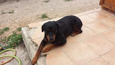cherche un chien a adopter chien bonheur. Black Bedroom Furniture Sets. Home Design Ideas