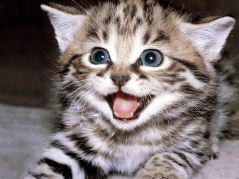Je cherche chaton gratuit chien bonheur - Petit chaton gratuit ...
