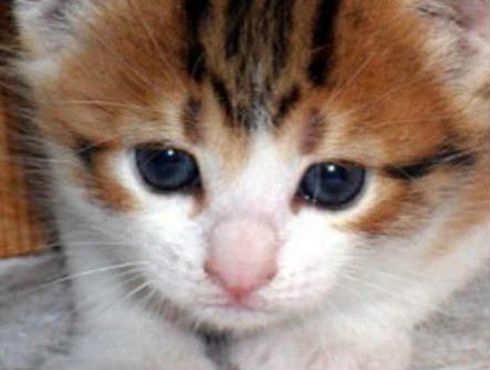 Chaton a donner archives chien bonheur - Petit chaton gratuit ...