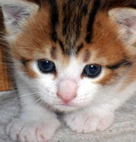 Le bon coin petit chaton gratuit chien bonheur - Jeux de petit chaton gratuit ...