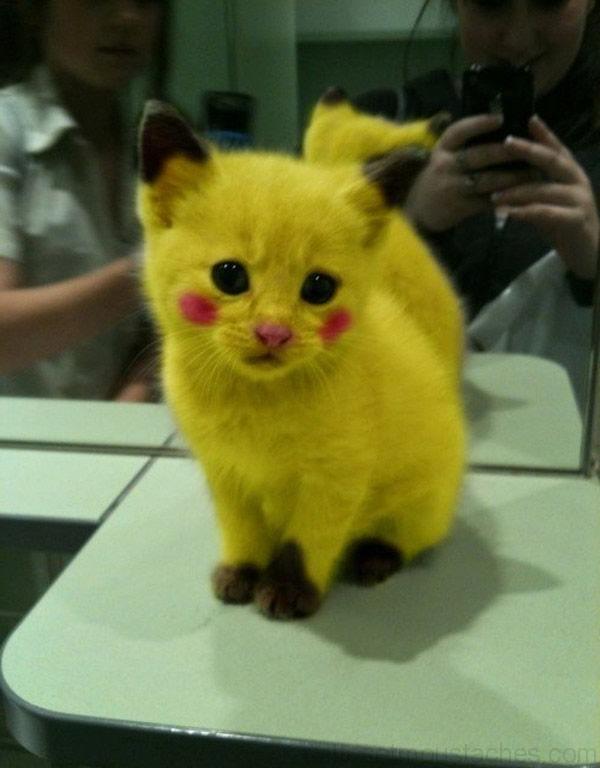 Chaton mignon a vendre chien bonheur - Image de chat mignon ...