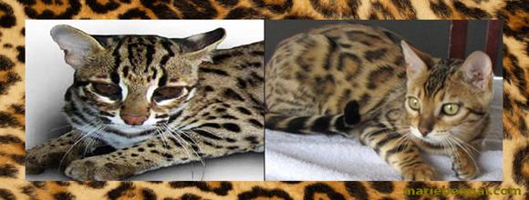 chat tigr donner chien bonheur. Black Bedroom Furniture Sets. Home Design Ideas