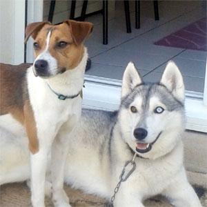 voir toutes les races de chiens chien bonheur. Black Bedroom Furniture Sets. Home Design Ideas